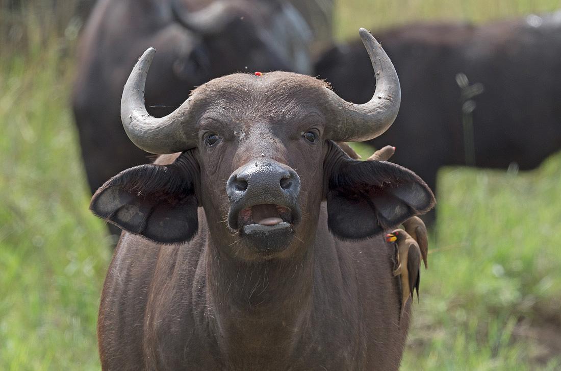 Kenya Big 5 Safari