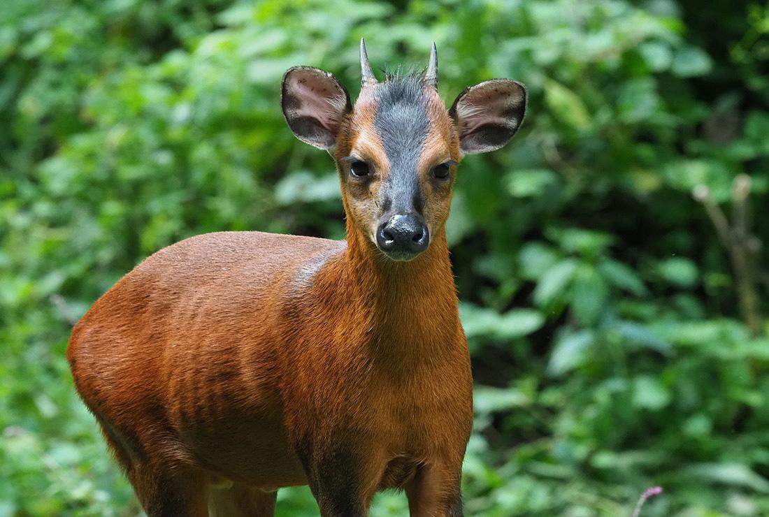 Bwindi Forest Mammals Animals