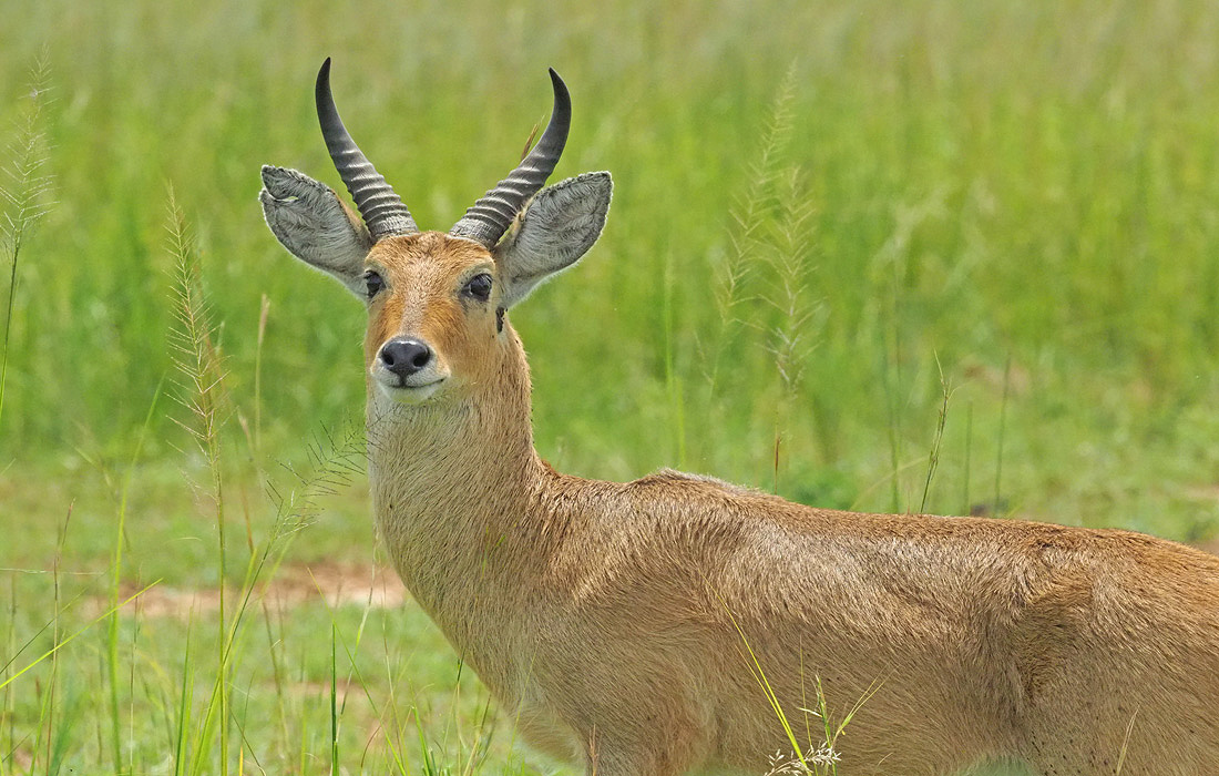 Uganda Wildlife National Parks