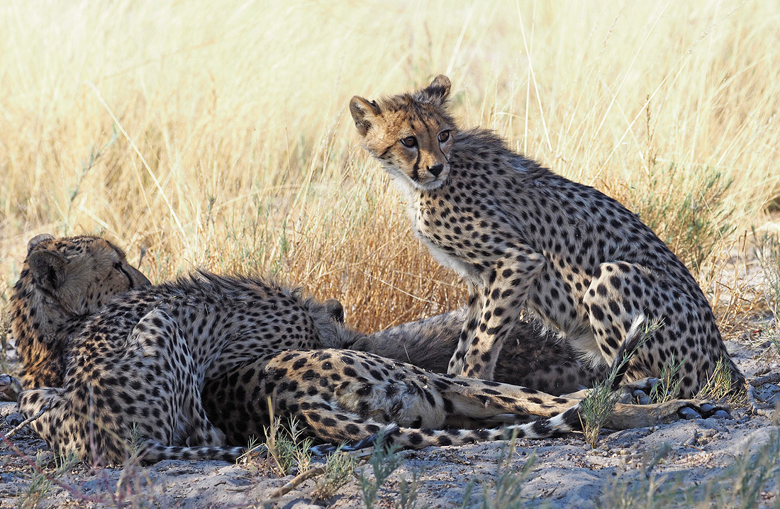 Real True African Safari