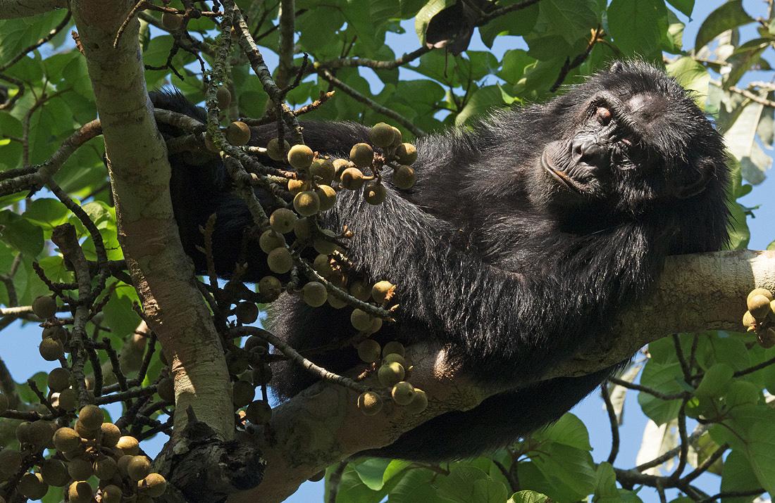 Rwanda Nyungwe Forest Excursions