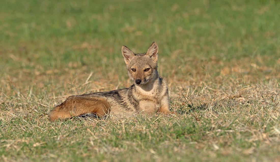 Kidepo Valley Animal Safari