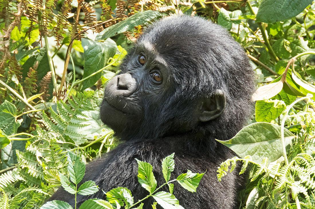 rwanda-gorilla-tours