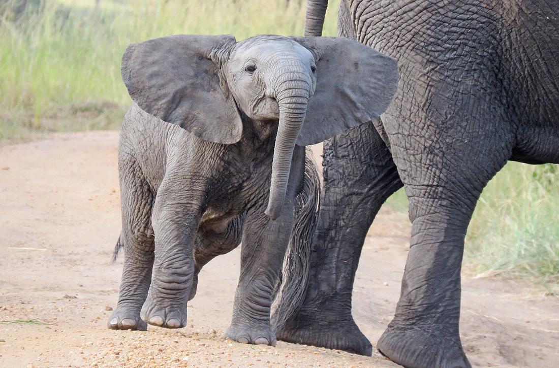 Cheap Africa Safari