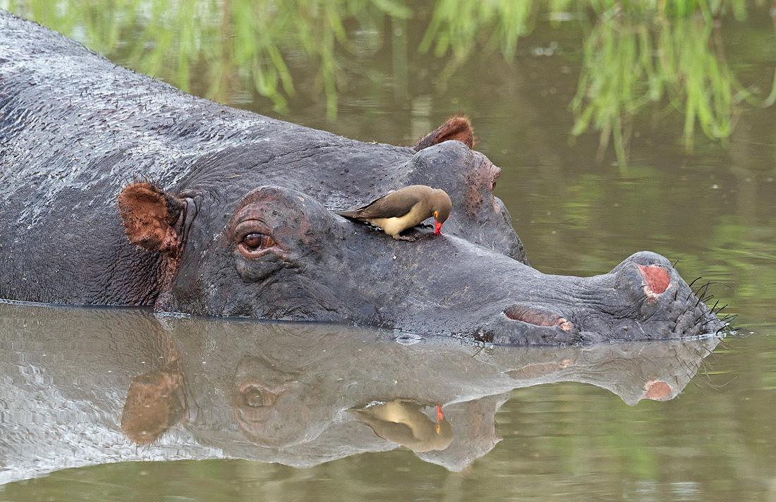 Africa Jungle Safari Tour