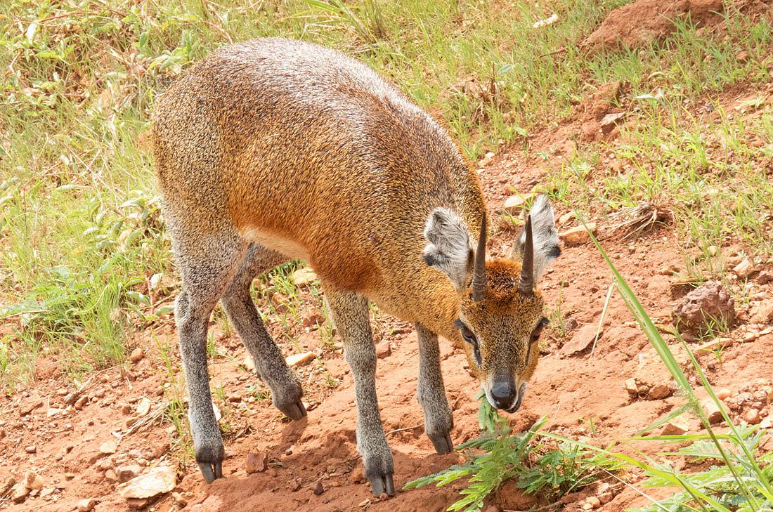 African Mammals List