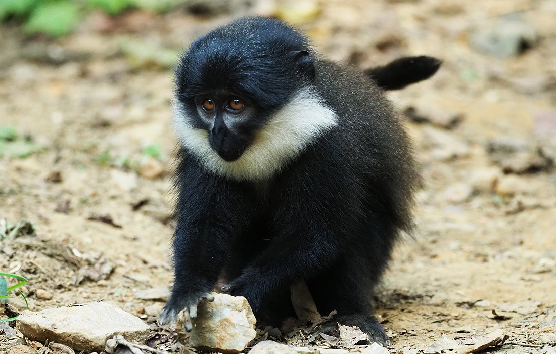 rwanda-gorilla-adventure