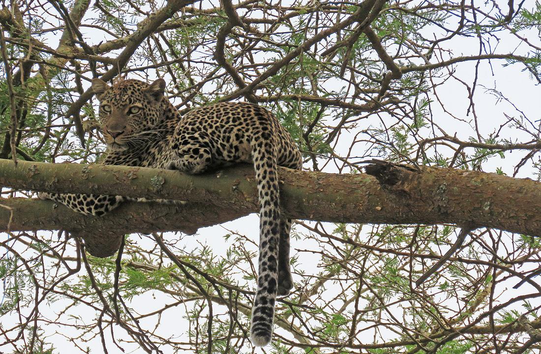 Wildlife Safari Adventure Rwanda