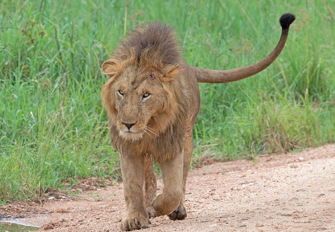 Kidepo Valley Wildlife Viewing Safari