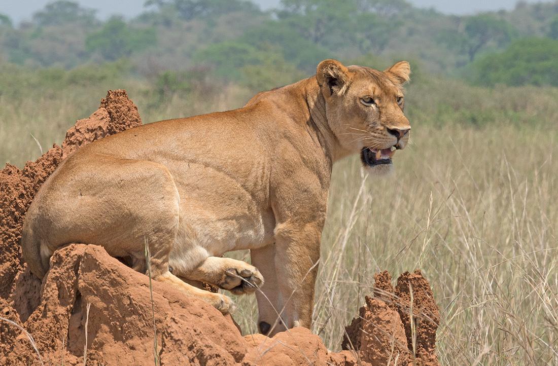 Uganda African Big 5 Safaris