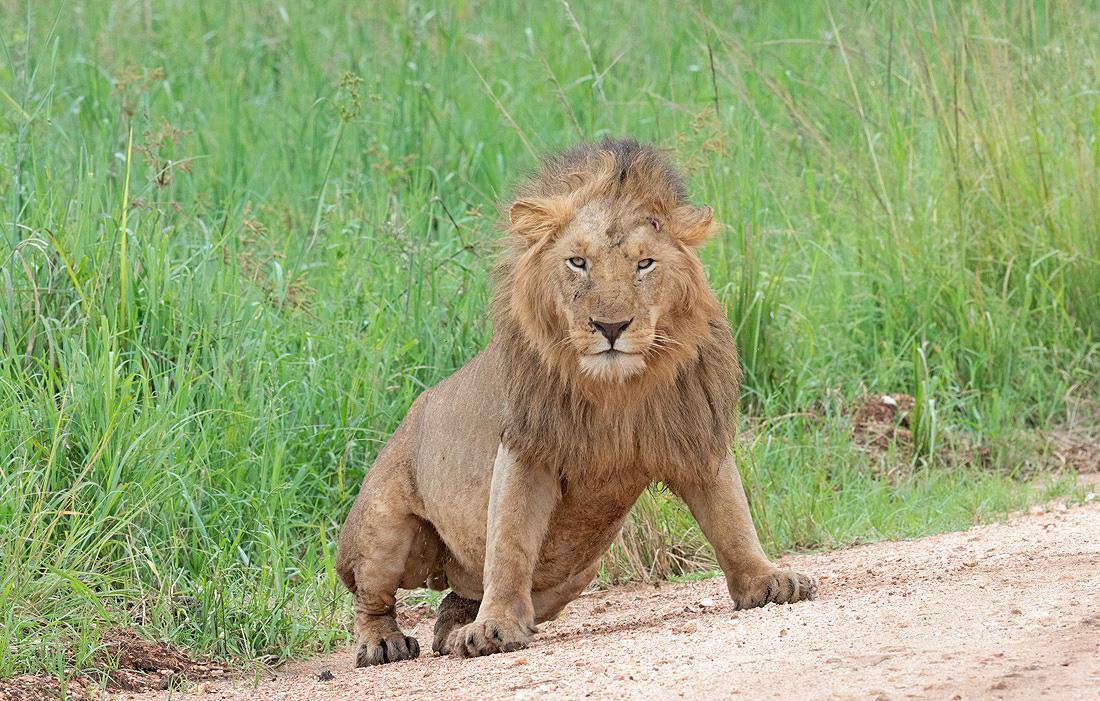 Kenya African Big Five Safari