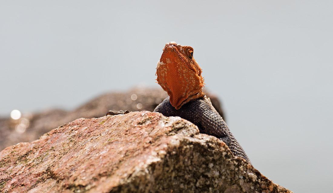 Herpetology Reptile Tour Uganda