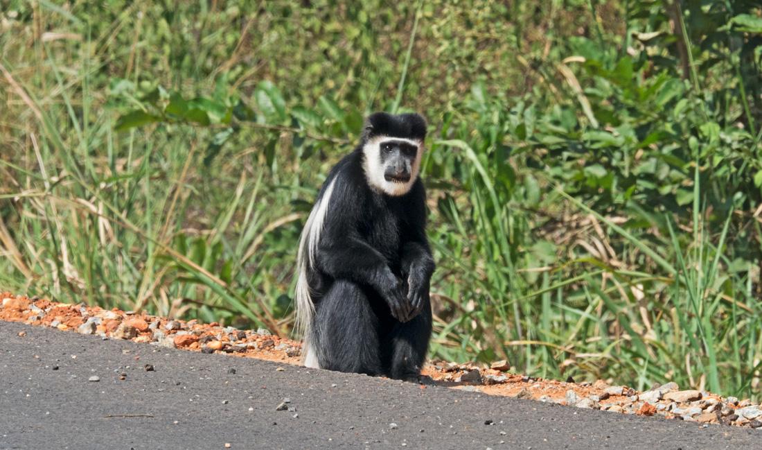 Uganda Rwanda Safari Experience