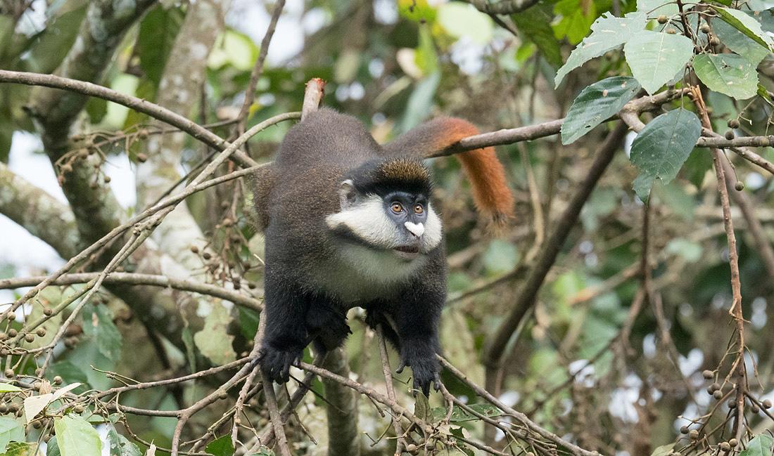 uganda-family-tour-adventure