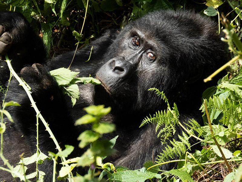 Rwanda_Tours