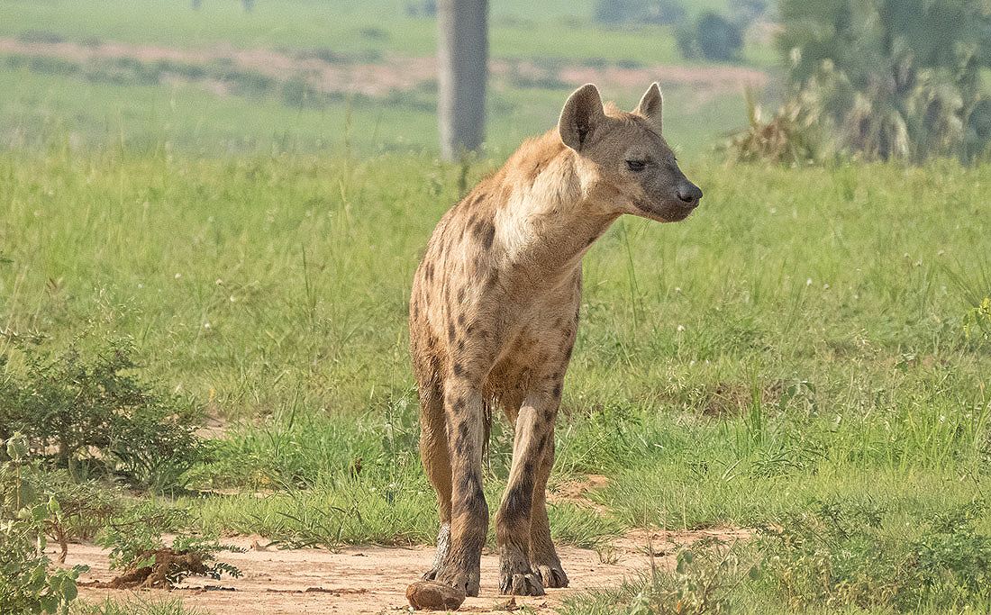 Best Guided Africa Safari Country