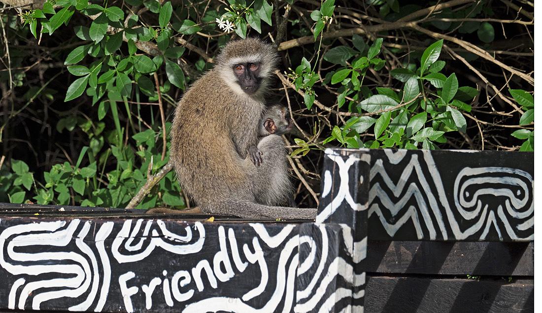 Entebbe Botanical Gardens Animals
