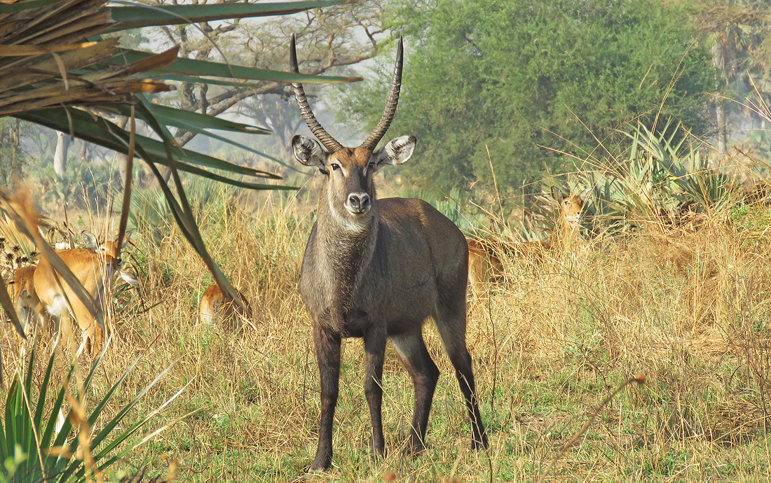 Kenya Wildlife Vacation Adventure