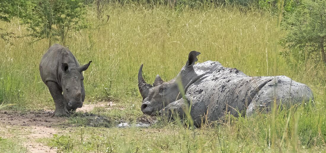 Uganda Rwanda Family Safari