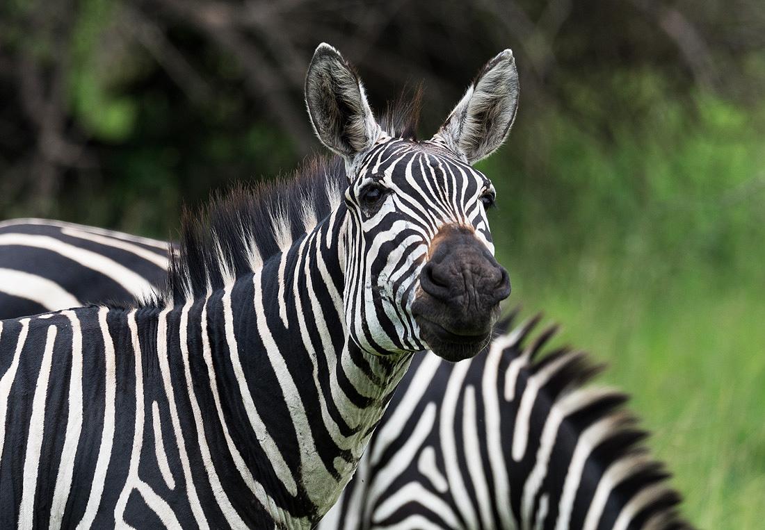 Rwanda Safari Safaris