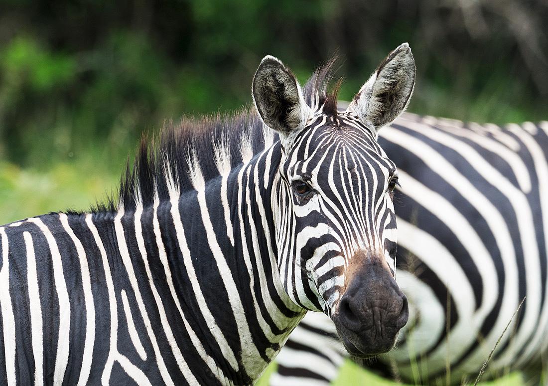 Mammal Safari Itinerary Review