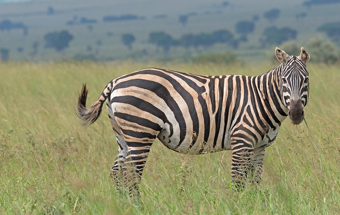 Mammals Uganda List
