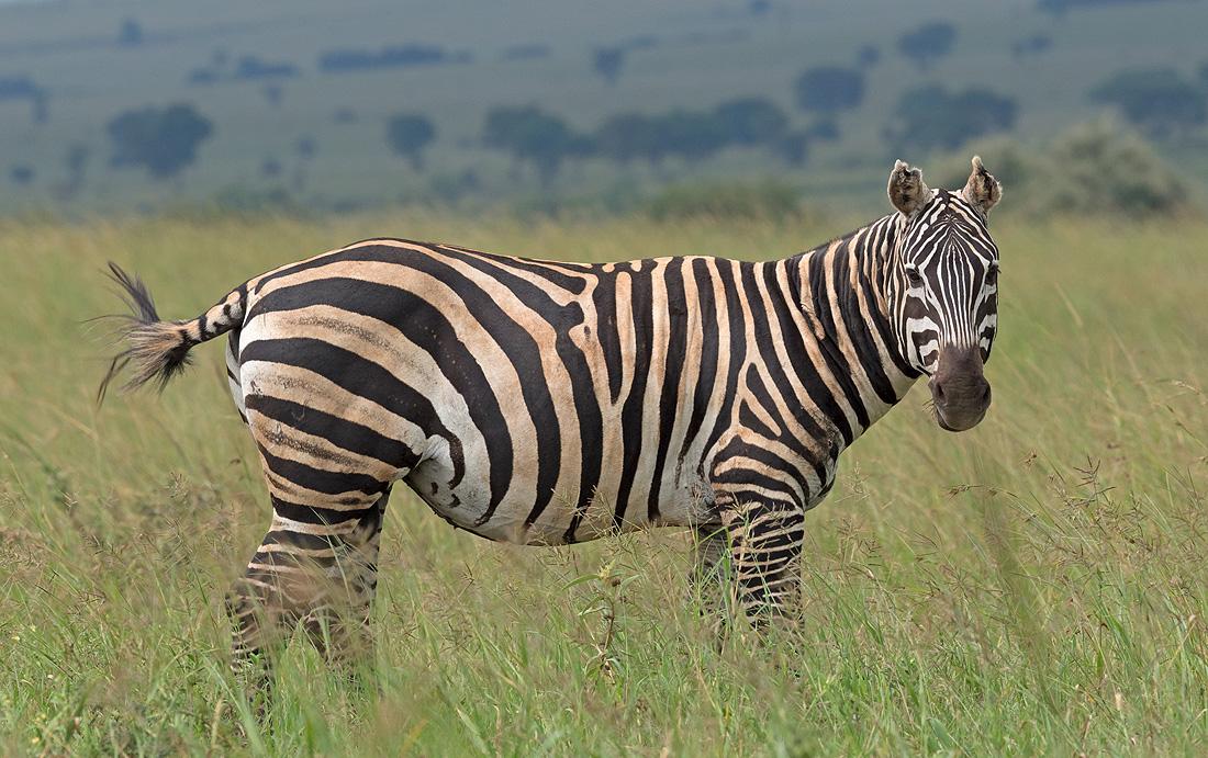 Kidepo Valley Safari Eastern Uganda